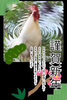 鶏(にわとり)の写真入り