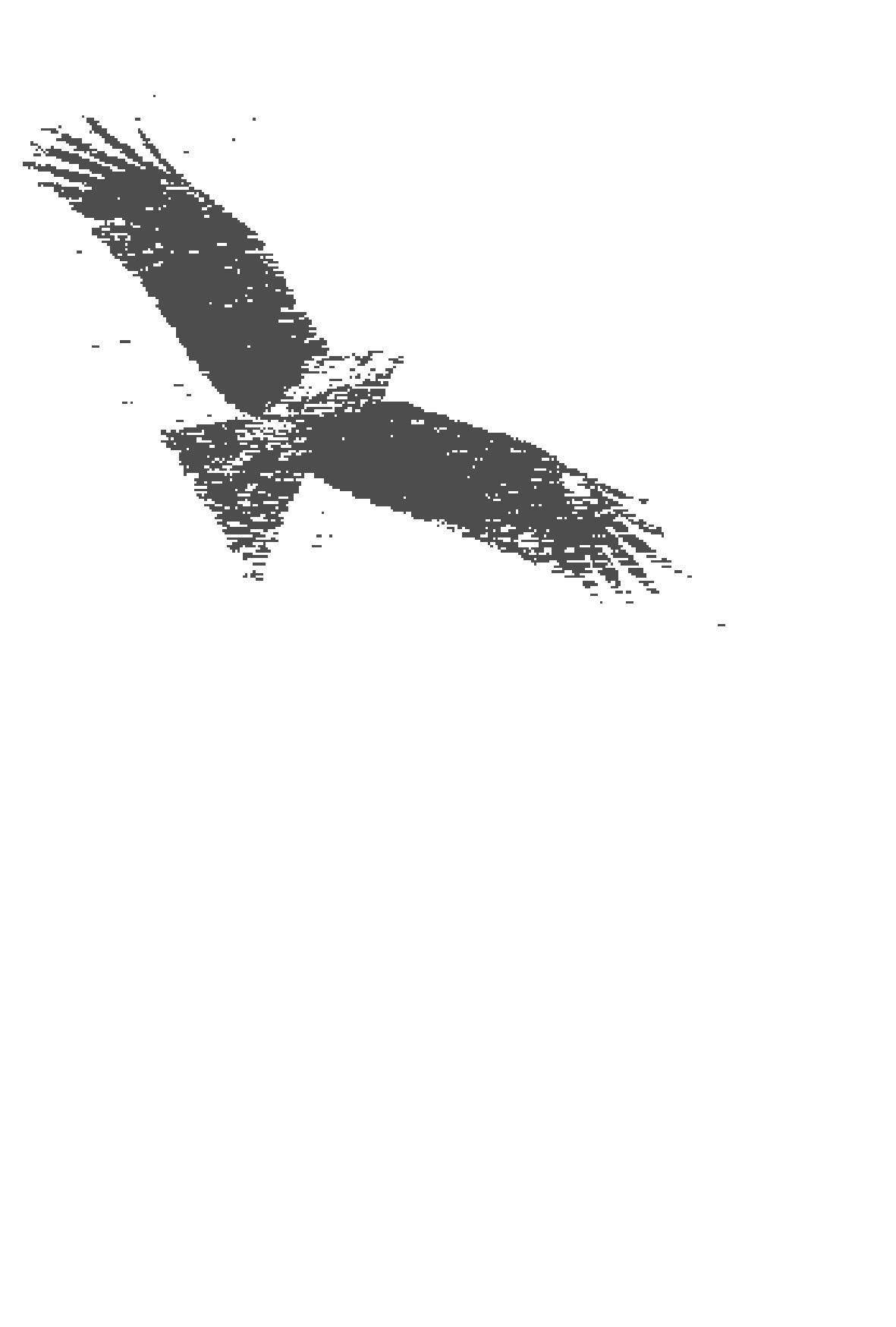 大きく羽を広げた鳥のイラストつき(文字なし)