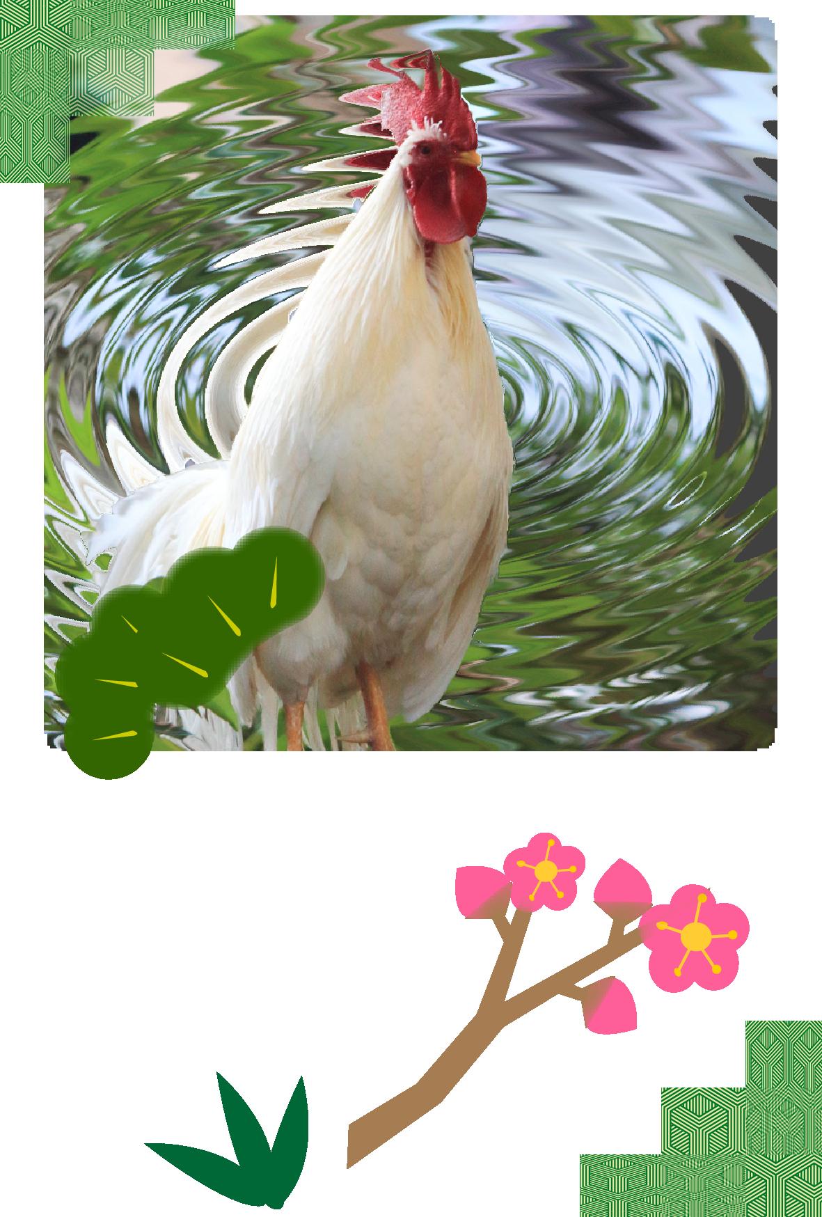 鶏(にわとり)の写真入り(文字なし)